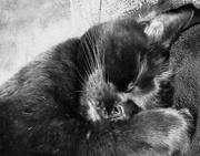 23rd Dec 2018 - Cat Nap