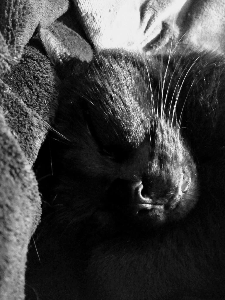 Sweet dreams by 4rky
