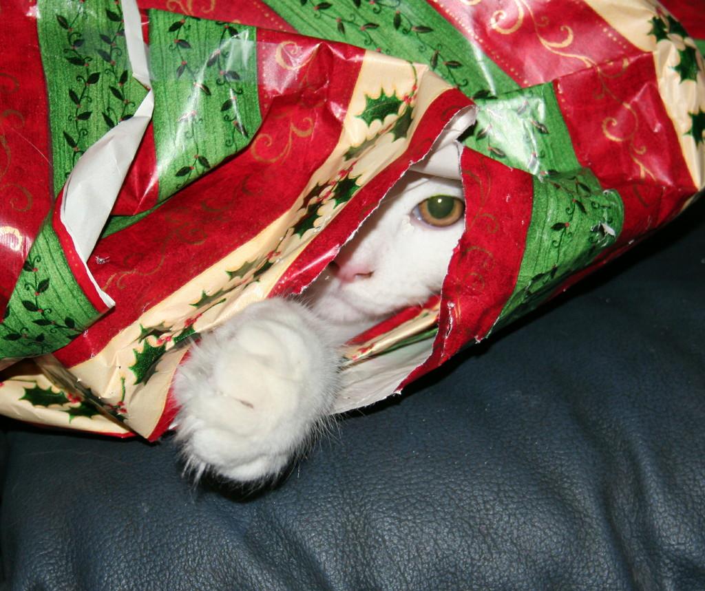I see you Santa. by hellie