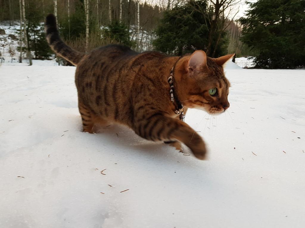 Snow cat by katriak