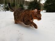 26th Dec 2018 - Snow cat