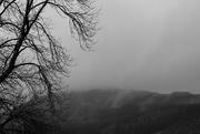 26th Dec 2018 - tree and mist