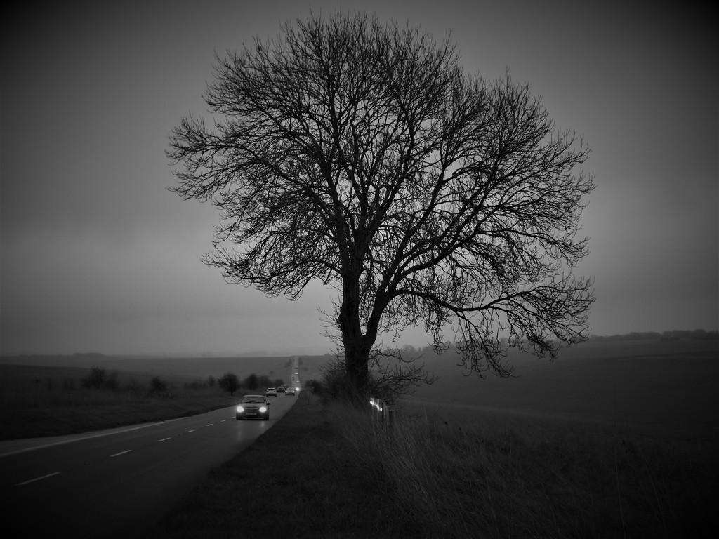 Dark Grey Matter by ajisaac