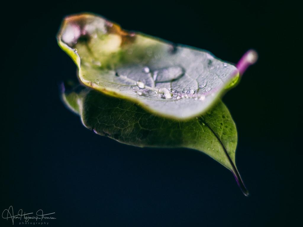Rainy day by atchoo