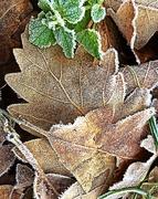 27th Dec 2018 - 27-12 frost