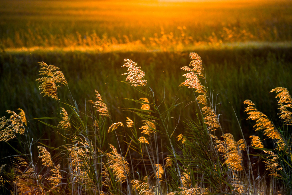 Glow of sunset by danette