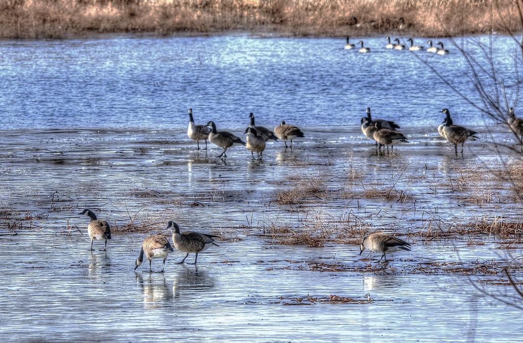 Walking On Thin Ice by lynnz