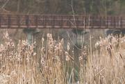 28th Dec 2018 - Bridge Backdrop