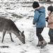 Oh, Deer! by farmreporter