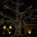 Live Oak with Christmas Lights