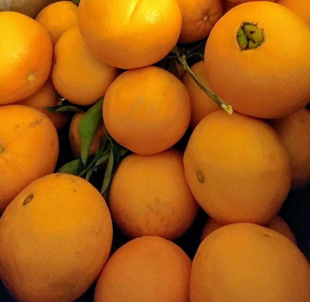 Fresh Oranges by harbie
