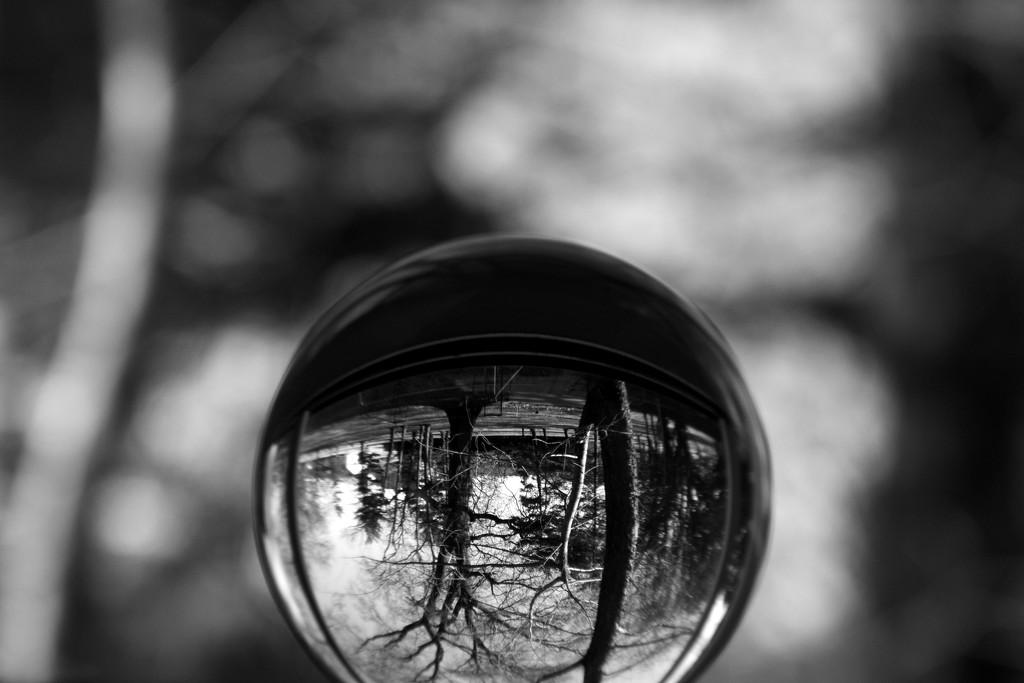 Winter Trees by lynbonn