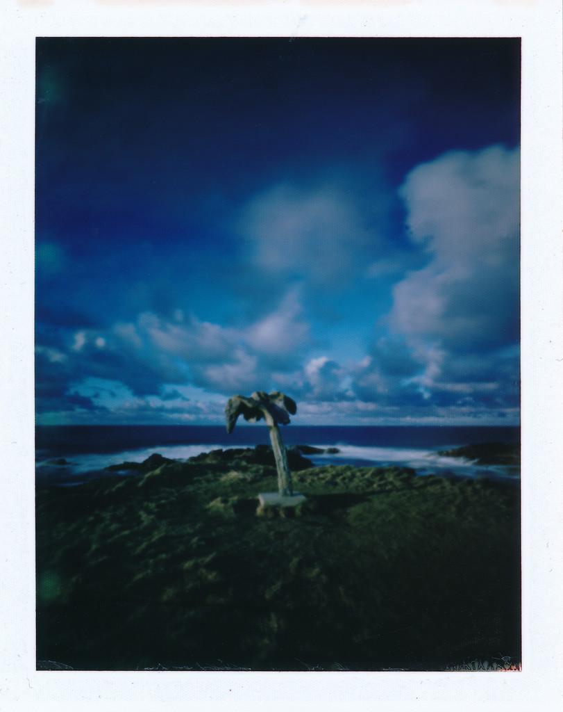 whalebone pinhole  by ingrid2101