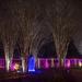 Brookside winter trees