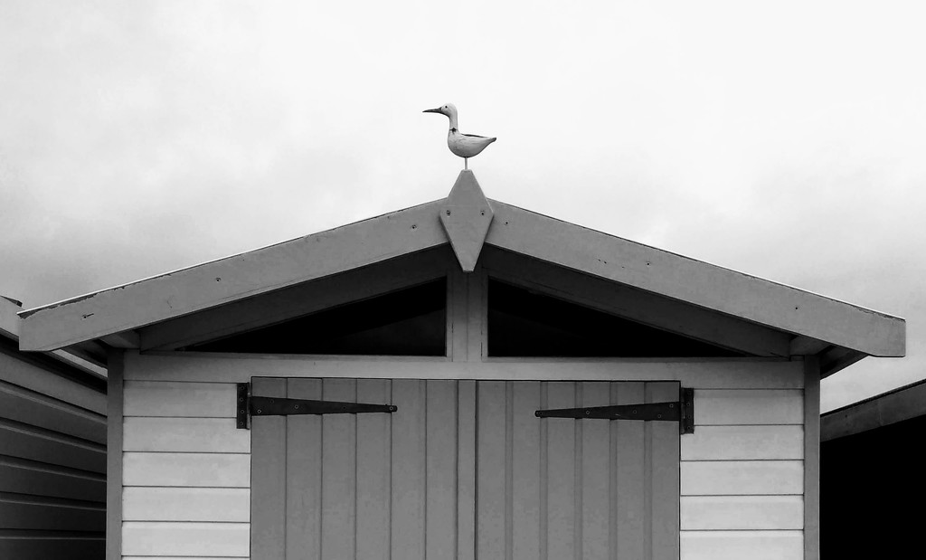 The Seagull by 4rky