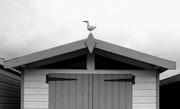 27th Dec 2018 - The Seagull