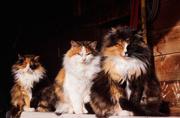 28th Dec 2018 - barn cats