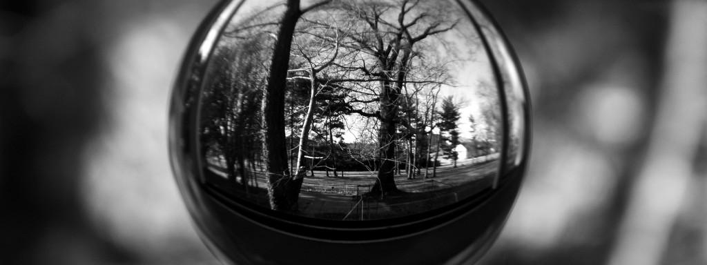 Winter Trees Redux by lynbonn