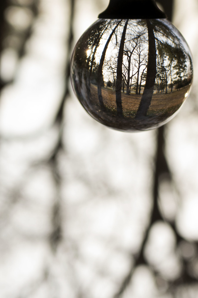 Winter Trees 2.0 by lynbonn
