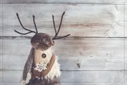 30th Dec 2018 - Mr. Moose