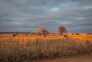 30th Dec 2018 - cow farm? pig farm? barn....rural