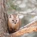 Sweet little pine marten! by fayefaye