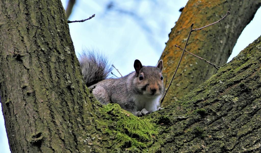 Hartsholme Squirrel by carole_sandford