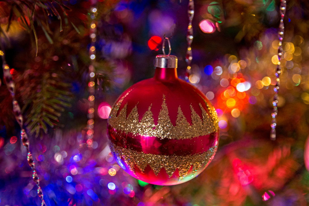 Before the Tree Comes Down by farmreporter