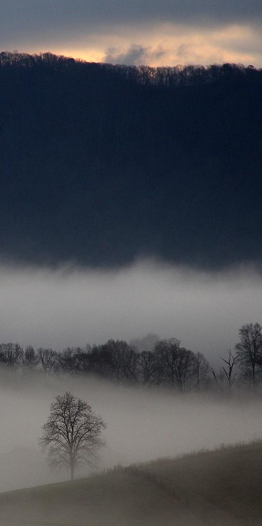 Tree in Fog by calm