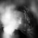 in a fog... by northy