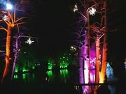 31st Dec 2018 - Stockeld Park