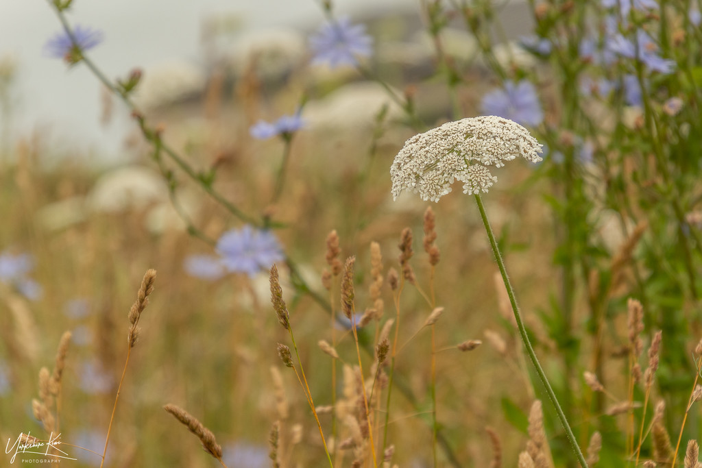 Simply Weeds by yorkshirekiwi