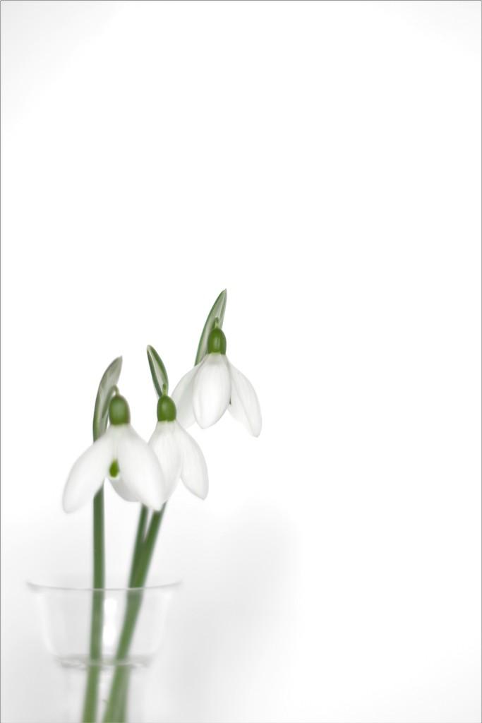 Simplicity by thedarkroom