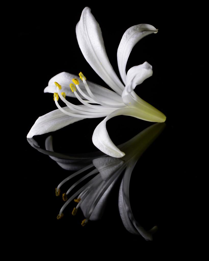 Fallen Flower _DSC3941 by merrelyn