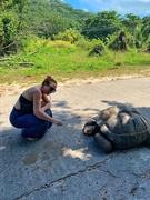 1st Jan 2019 - Turtle posing before eating.