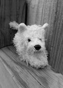 1st Jan 2019 - Missing pup