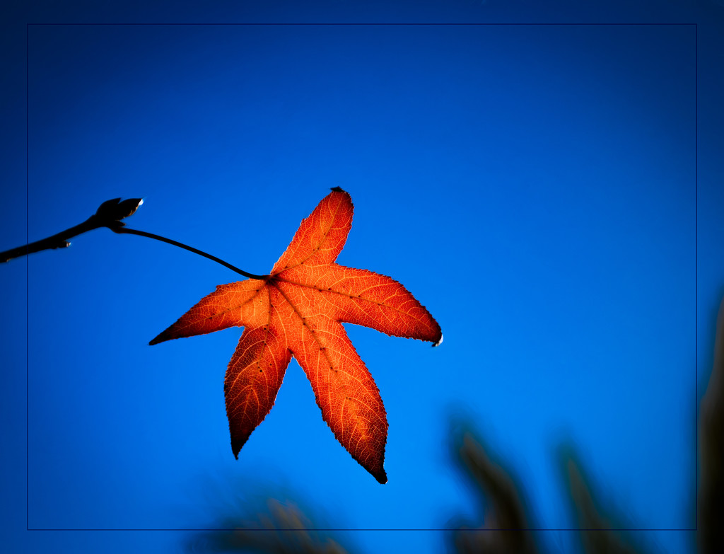 Autumn Leaf........Delayed by stray_shooter
