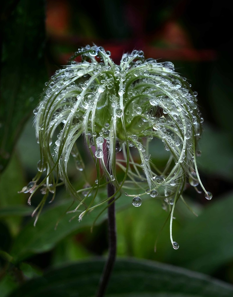 Weeping in the rain by maureenpp