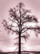 2nd Jan 2019 - Tree