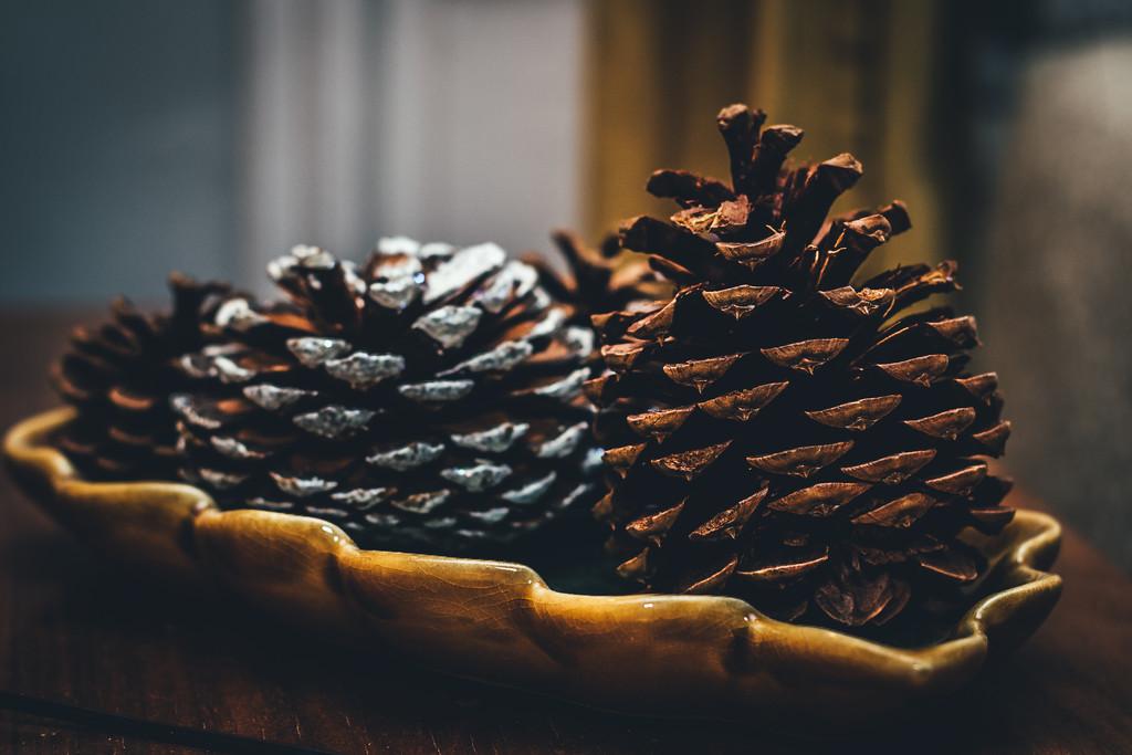 Pine Cone Perfection by mamazuzi