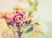 2nd Jan 2019 - vintage rose