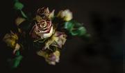 2nd Jan 2019 - vintage rose ii