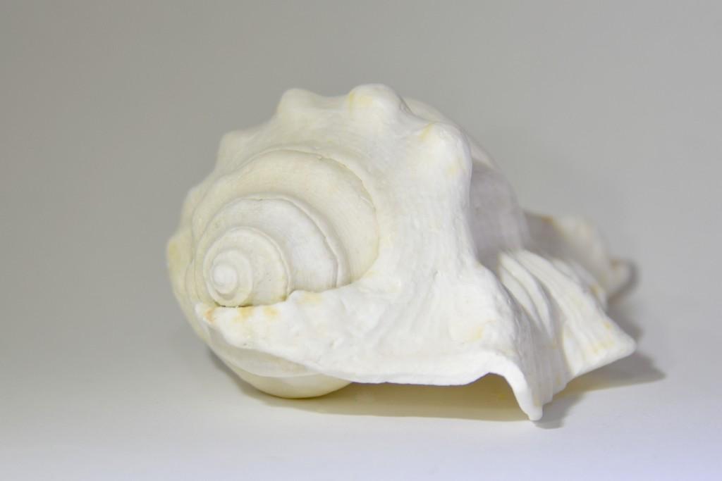 Just A Shell...._DSC3767 by merrelyn