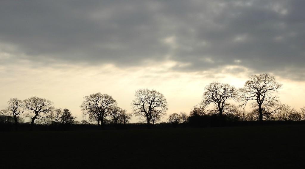 Skyline by oldjosh