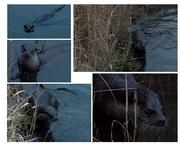 3rd Jan 2019 - Otter delight