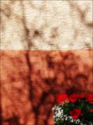 3rd Jan 2019 - wallflowers and shadows