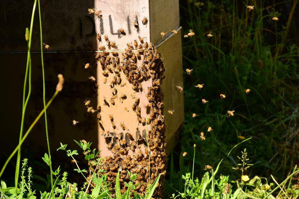 Bee Hives by nickspicsnz