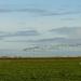 birds in the polder