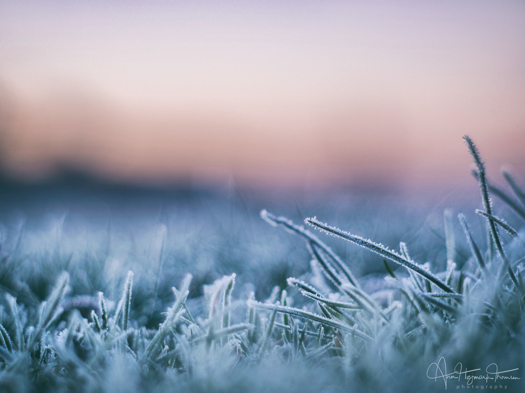Frosty morning by atchoo