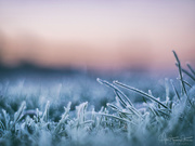 3rd Jan 2019 - Frosty morning